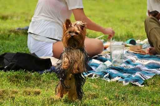 dogs-dinner